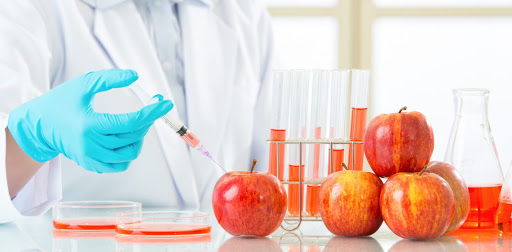 genetically modified food essay